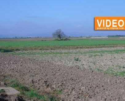 RSI-Invest bietet an: Ackerland in der Vorderpfalz