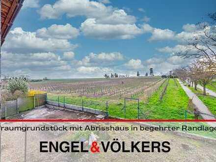 Freinsheim: Traumgrundstück mit Abrisshaus in begehrter Weinbergsrandlage!