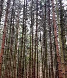 Fast 1ha Wald mit gutem altem Bestand!