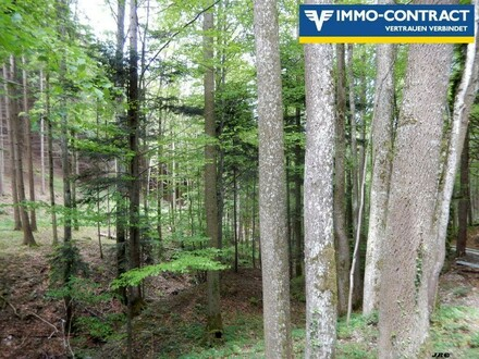 Forstwirtschaft - Mischwald - guter Bestand