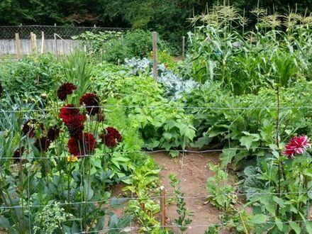Gartengrundstück im Moosalbtal
