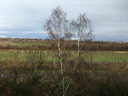 NW, Wohnung mit sehr schönem Ausblick auf Rebenflächen vor Mußbach, Gimmeldingen und Haardt