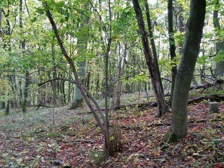 Waldfläche, Laubwald