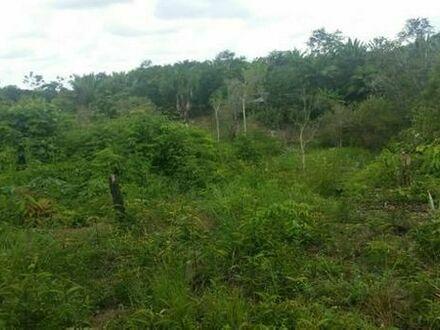 Brasilien 450 Ha Grundstück mit Acai - Pflanzugen AM