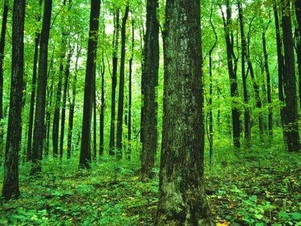 Wald im Kroatien 175 ha