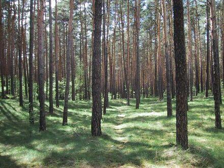 25 Hektar Wald und Acker