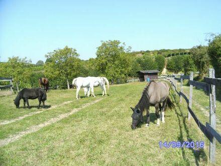 Bauernhaus Reithalle Pferdestall Südbaden