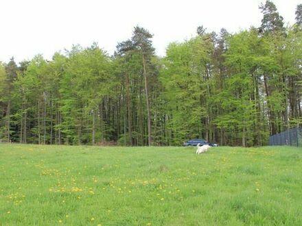 Sonniges Baugrundstück im Luftkurort Trippstadt - Langensohl