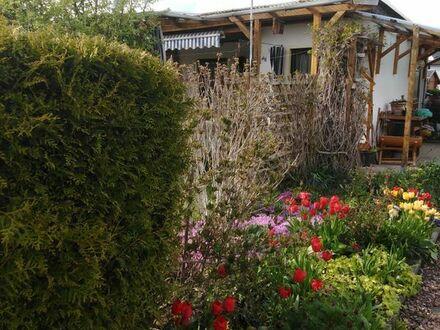 Pachtgarten in Kleingartenanlage Niederwuerschnitz zu verkaufen