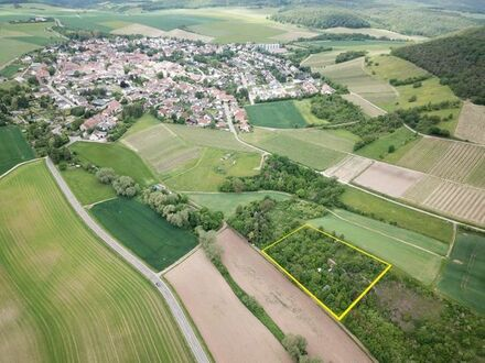 Große Gartengrundstücke direkt bei Fürfeld - 3200 qm und 2300 qm