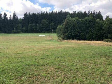 Teichanlage,Wald Wiese
