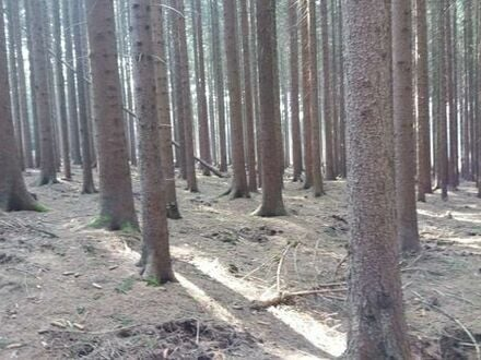Wald im Vogtland zu verkaufen