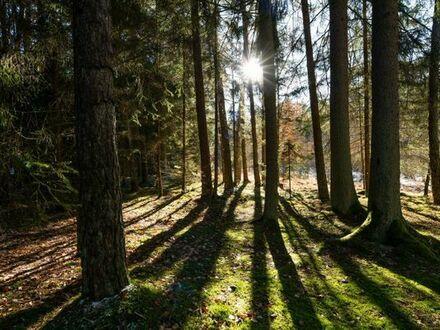 Traumhaftes ca. 15.000 m² großes Waldgrundstück im Dürnbucher Forst