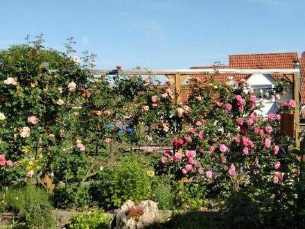 Baumschnitt, Haus- und Gartendienstleistungen durch Fachwart
