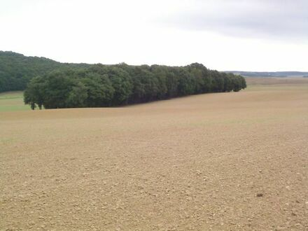 Wald im Donnersbergkreis