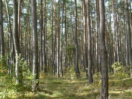Wald in Roßtal-Buchschwabach (13.593m²)