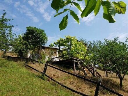 Gartengrundstück für Weinliebhaber bei Pecs in Ungarn