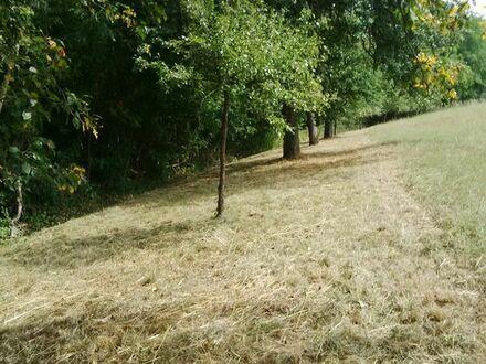 Wiesengrundstück mit Obstbäumen