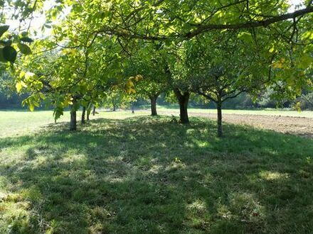 Obstbaumwiese in Ettlingen-Oberweier zu verkaufen