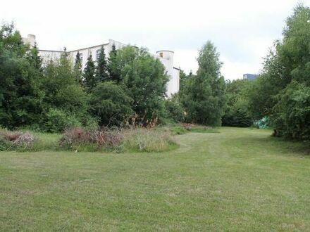 Urban Gardening/Gärtnern mitten in der Stadt zum Anmieten und Wohlfühlen