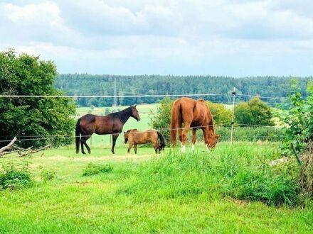 Landhaus m. Halle u. Offenstallung  in Bestzustand Der Traum für Pferde- u. Tierliebhaber