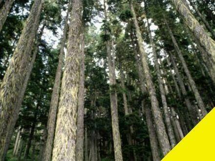Fichtenwald 1,6 ha in der Rhön - durchforstet mit Ernte-Gutachten