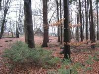 6,5 ha Wald mit historischem Gebäude in 27446 Selsingen