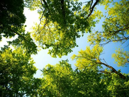 Wald Wald Wald Teil I - Baumholder - Auf Gerstert