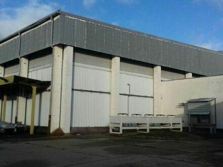 Lager-Porduktionshalle mit Tiefkühlzellen zu vermieten