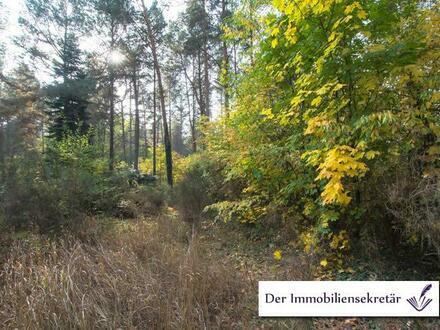 Grundstück im Außenbereich in Zühlsdorf – Mühlenbecker Land - Oberhavel