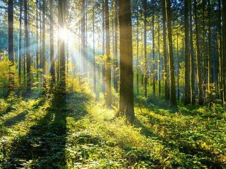 Waldgrundstück am Rande von Grinzing