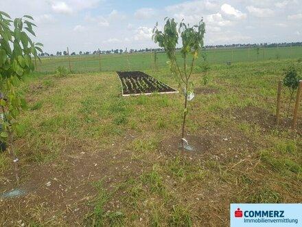 Sonniger Obstgarten zu verpachten! Der Traum vom Landgarten