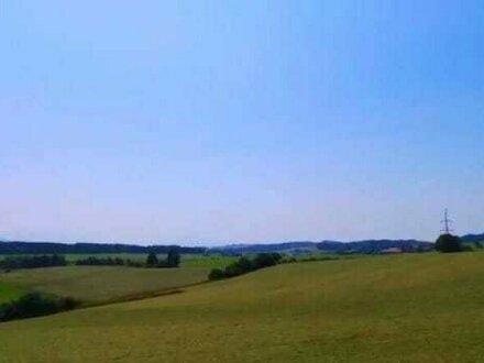 Sonniges Grünland am Ortsrand
