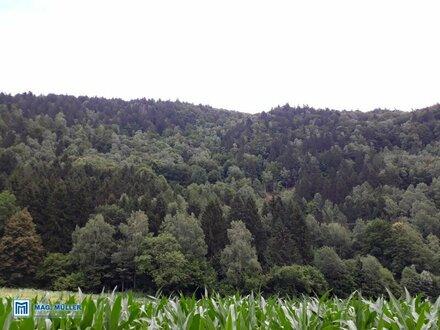 Waldparzelle nähe Radenthein /Millstättersee - ca. 2,8 ha -