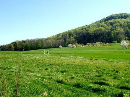 Bauplatz - 4021 m² f. EFH/DH - traumhafte Ortsrandlage Nähe Lauf unverbaubar am Fuß d. Glatzensteins