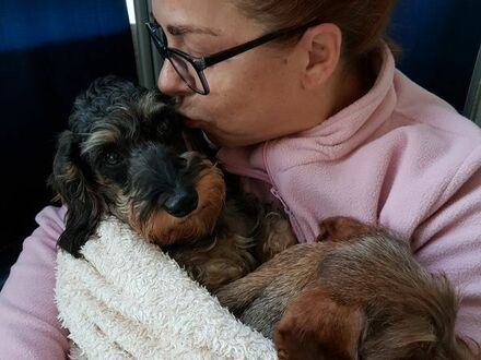 HundePension sucht neue Bleibe