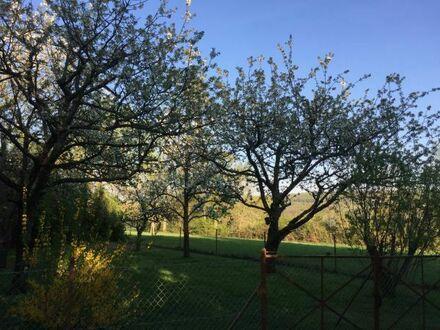 Schönes, gepflegtes Obstbaumgrundstück