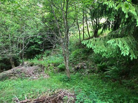 Grundstück mit Carport und Naturkeller in Freudenstadt