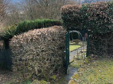 Hirschhorn, Waldgrundstück mit Wohnhütte