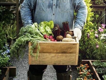 Garten Kleingarten Gemüsegarten Selbstversorger Wiese Acker Feld