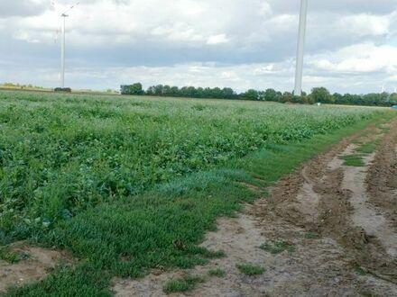 Ackerfläche am Grasweg! Zukünftiges Vorranggebiet für Windräder in Haßloch!