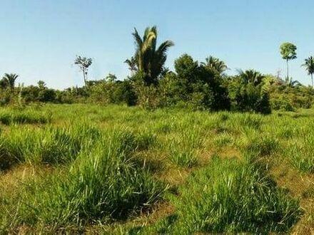 Brasilien 290 Ha Grundstück mit kleinem Privatsee bei Autazes AM