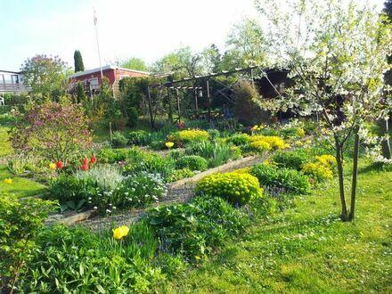 Kleingarten in Zeulenroda West abzugeben - liebevoll gestaltet