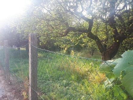 Schönes naturbelassenes Grundstück mit vielen Obstbäumen zu vermieten
