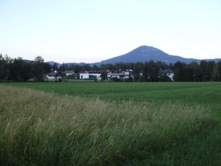 Grünland, Wiese in Salzburg Leopoldskron