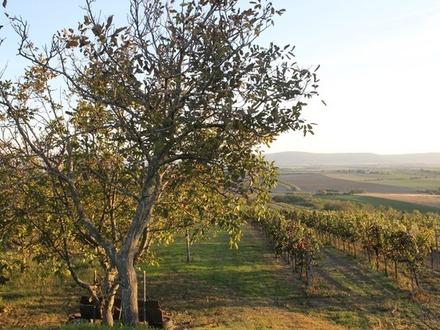 Provisionsfrei! Weinzeilen mit Weingartenhütte