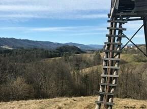 12,5 ha Wald und Wiesen Nähe Leutschach