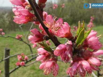 3721 Limberg: Gepflegter Obstgarten in Südhanglage mit Aussicht