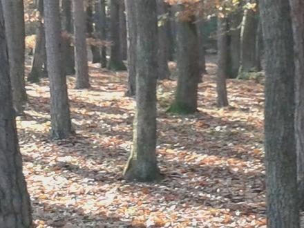 1,72 ha Waldfläche in Mannersdorf/Rabnitz zu verkaufen
