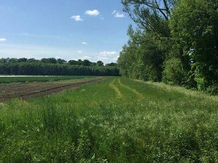 ca. 2000 qm Wiese / Ackerland in Lorsch langfristig zu verpachten